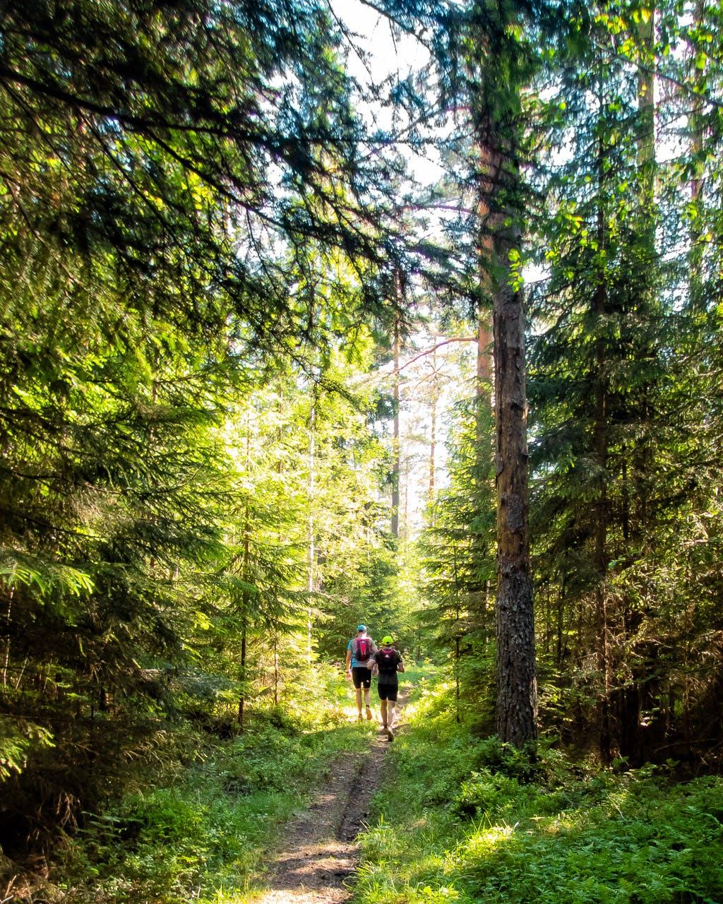 Björnfrossa ultramaraton 2018